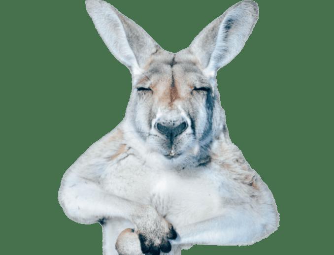 Web Development Services Melbourne